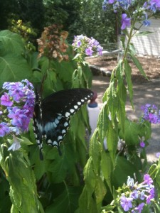 Butterfly Lodging in Eureka Springs